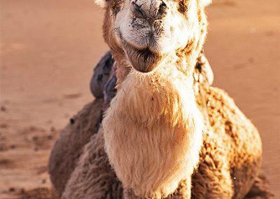 marrocos19